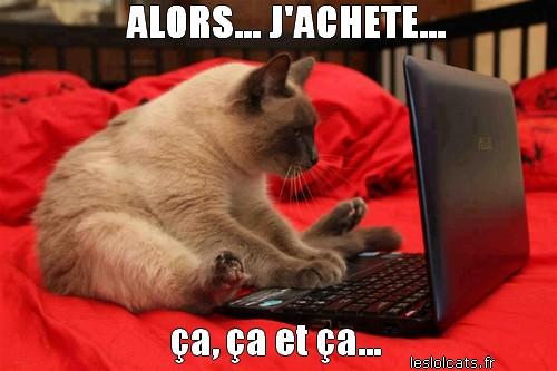 chat-ordinateur