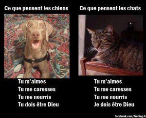 chiens10